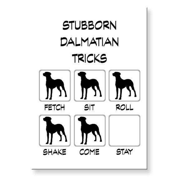 Dalmatian Stubborn Tricks Funny Fridge Magnet
