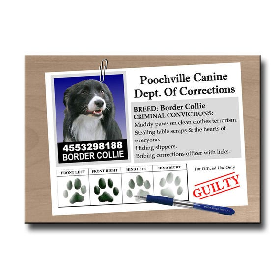 Border Collie Rap Sheet Fridge Magnet No 1