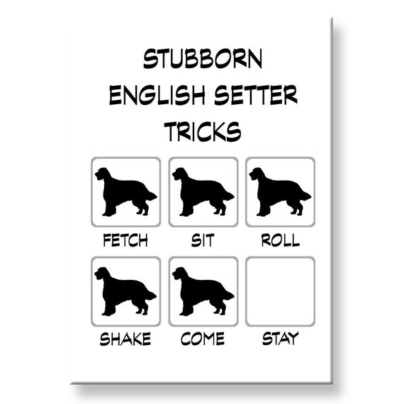 English Setter Stubborn Tricks Funny Fridge Magnet