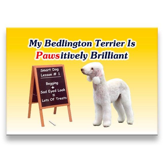 Bedlington Terrier Pawsitively Brilliant Fridge Magnet