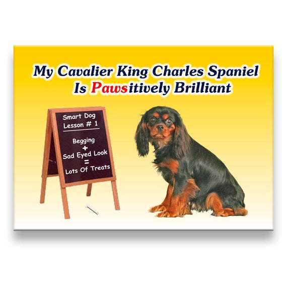 Cavalier King Charles Spaniel Pawsitively Brilliant Fridge Magnet No 3