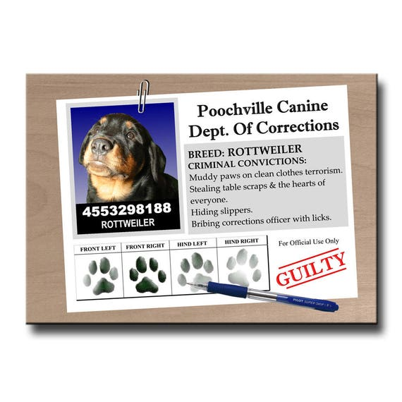 Rottweiler Rap Sheet Fridge Magnet
