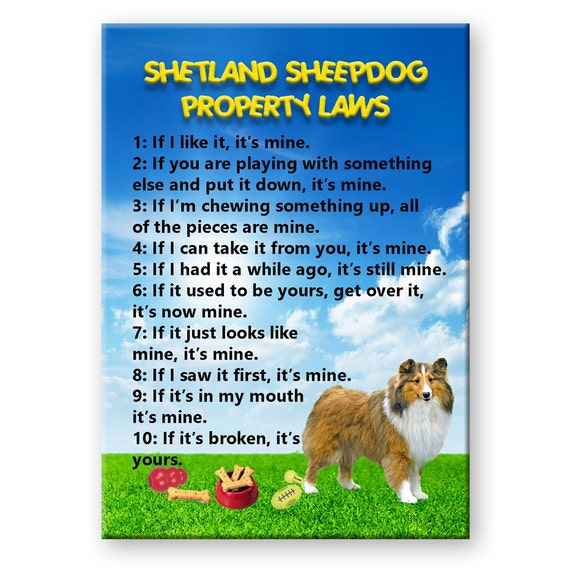 Shetland Sheepdog Property Laws Fridge Magnet No 1