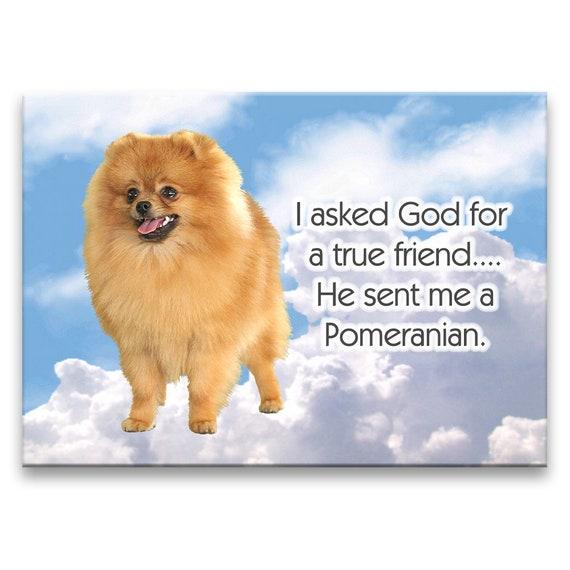 Pomeranian True Friend Fridge Magnet