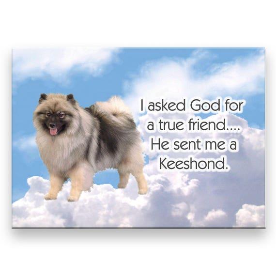 Keeshond True Friend Fridge Magnet