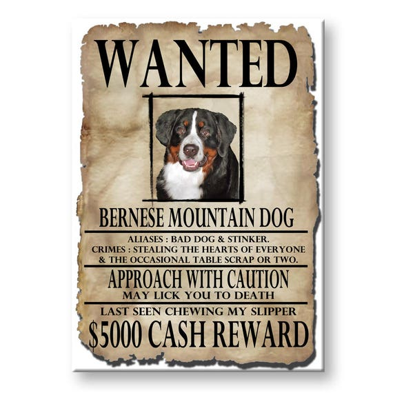 Bernese Mountain Dog Wanted Poster Funny Fridge Magnet