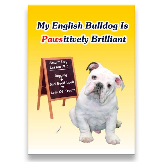 English Bulldog Pawsitively Brilliant Fridge Magnet No 3