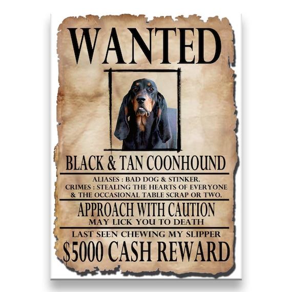 Black and Tan Coonhound Wanted Poster Funny Fridge Magnet