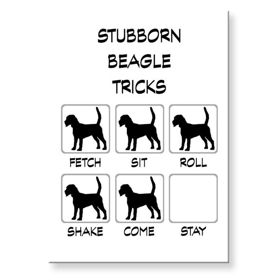 Beagle Stubborn Tricks Fridge Magnet