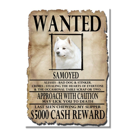 Samoyed Wanted Poster Fridge Magnet