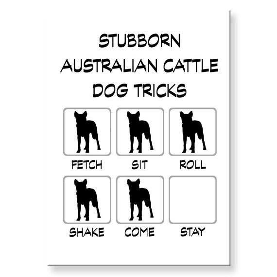 Australian Cattle Dog Stubborn Tricks Fridge Magnet