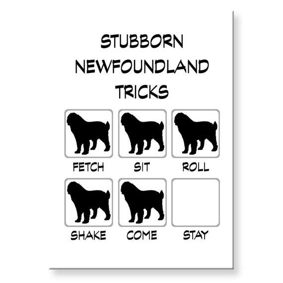 Newfoundland Stubborn Tricks Fridge Magnet