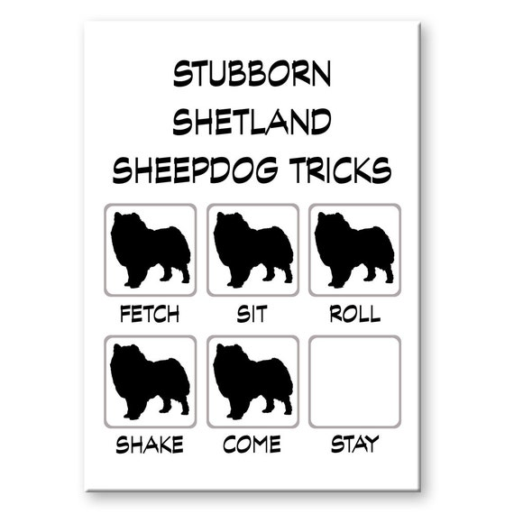 Shetland Sheepdog Stubborn Tricks Fridge Magnet