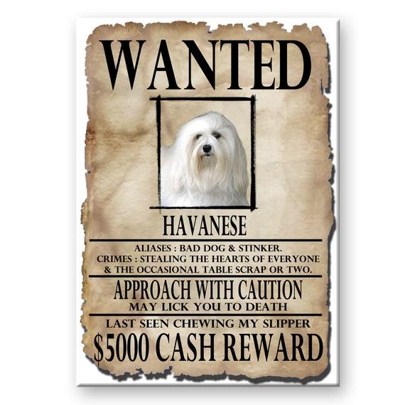 Havanese Wanted Poster Fridge Magnet No 1