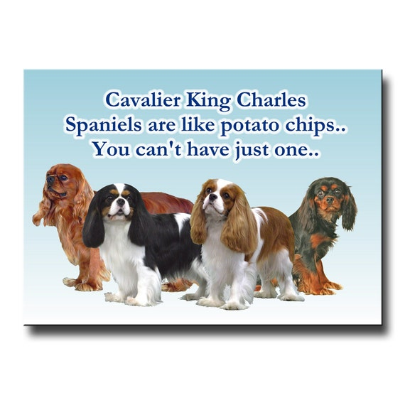 Cavalier King Charles Spaniel Can't Have Just One Fridge Magnet