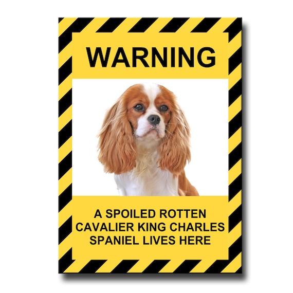 Cavalier King Charles Spaniel Spoiled Rotten Fridge Magnet No 2
