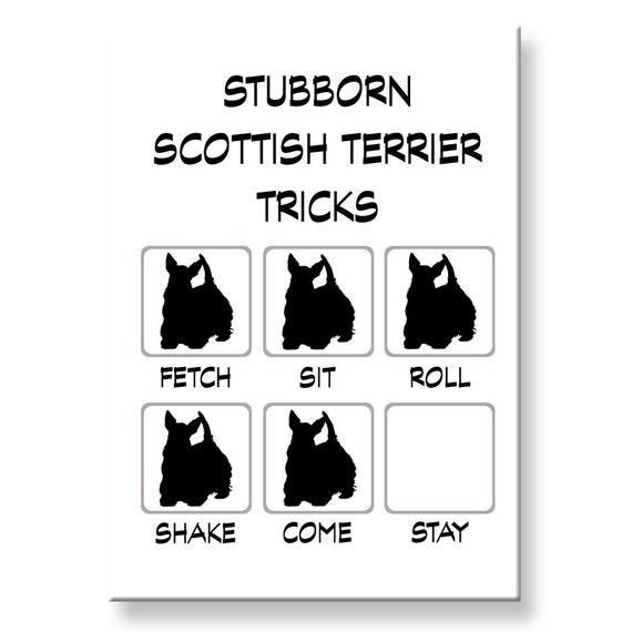 Scottish Terrier Stubborn Tricks Fridge Magnet