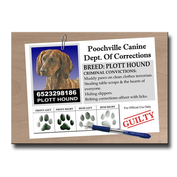 Plott Hound Rap Sheet Fridge Magnet