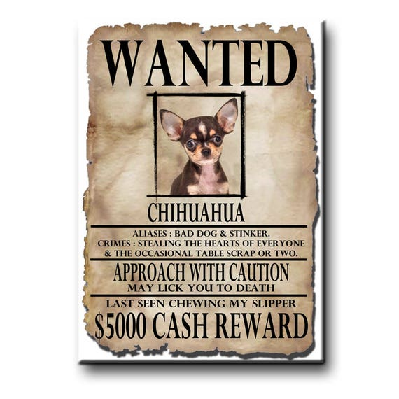 Chihuahua Wanted Poster Fridge Magnet No 3