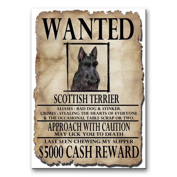 Scottish Terrier Wanted Poster Fridge Magnet