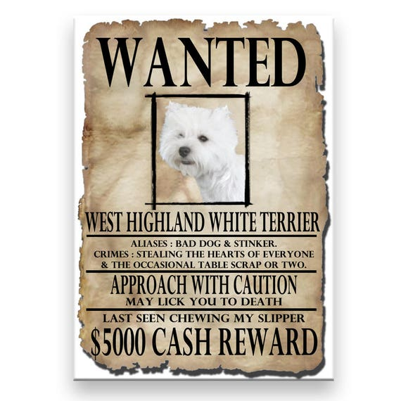 West Highland White Terrier Wanted Poster Fridge Magnet