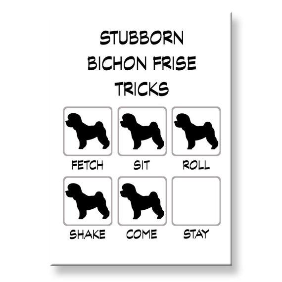 Bichon Frise Stubborn Tricks Funny Fridge Magnet