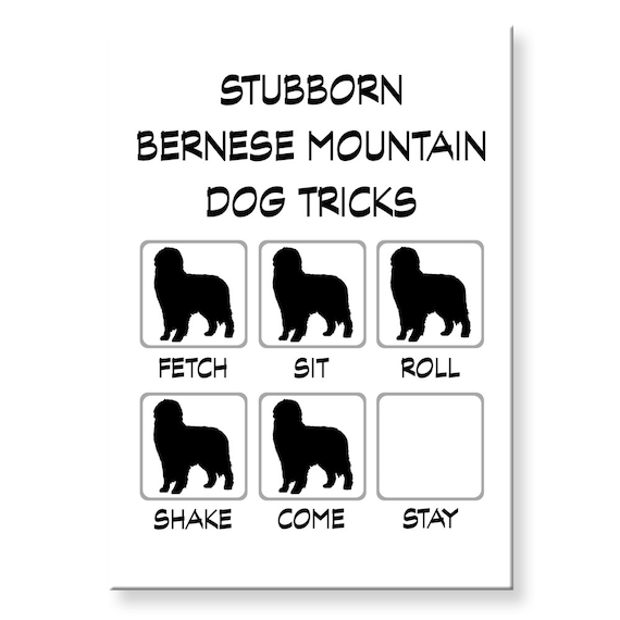Bernese Mountain Dog Stubborn Tricks Funny Fridge Magnet