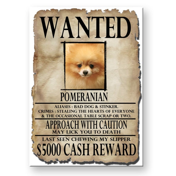 Pomeranian Wanted Poster Fridge Magnet