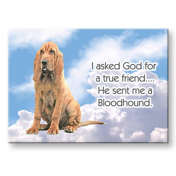 Bloodhound True Friend Fridge Magnet