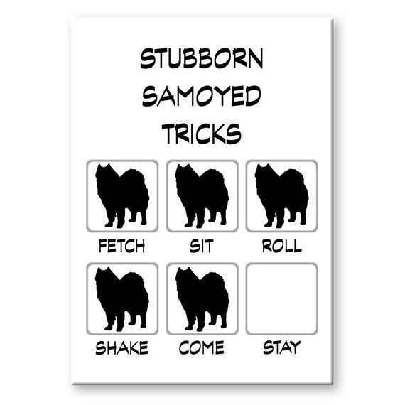 Samoyed Stubborn Tricks Fridge Magnet
