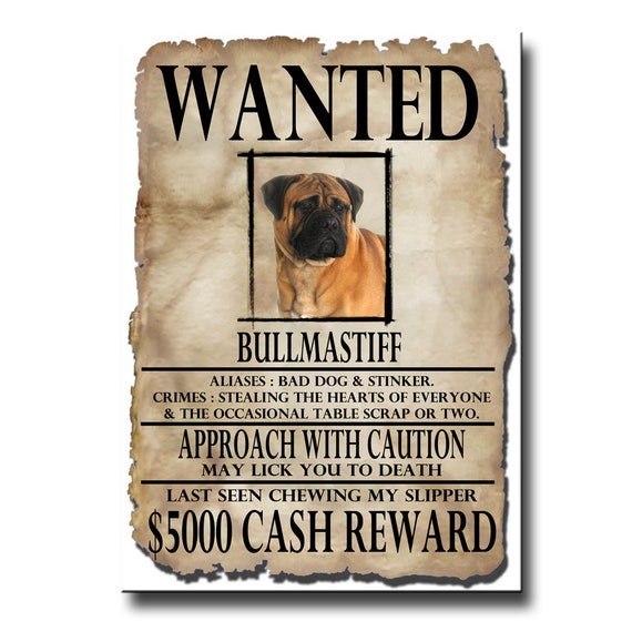Bullmastiff Wanted Poster Fridge Magnet No 1
