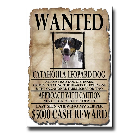 Catahoula Leopard Dog Wanted Poster Fridge Magnet