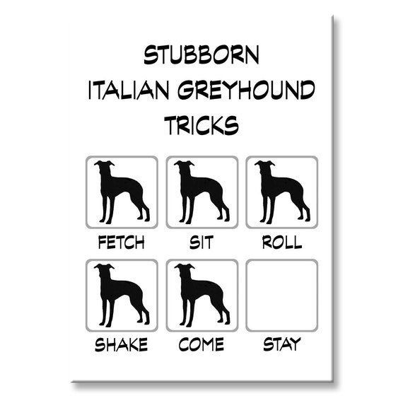 Italian Greyhound Stubborn Tricks Fridge Magnet
