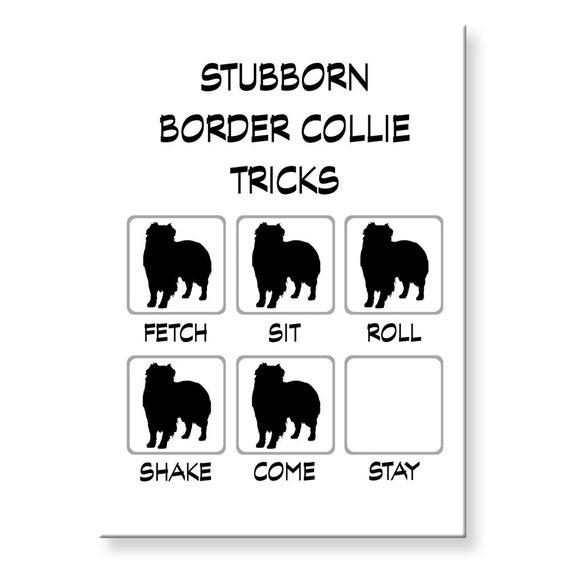 Border Collie Stubborn Tricks Funny Fridge Magnet
