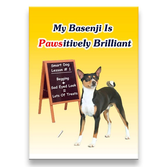 Basenji Pawsitively Brilliant Fridge Magnet No 2