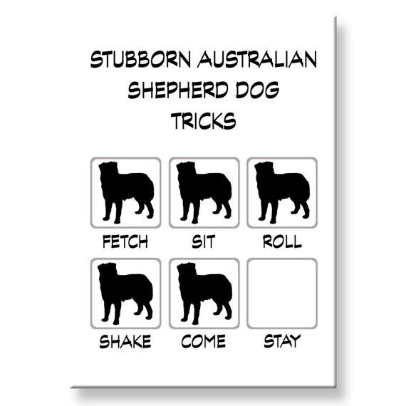 Australian Shepherd Dog Stubborn Tricks Fridge Magnet