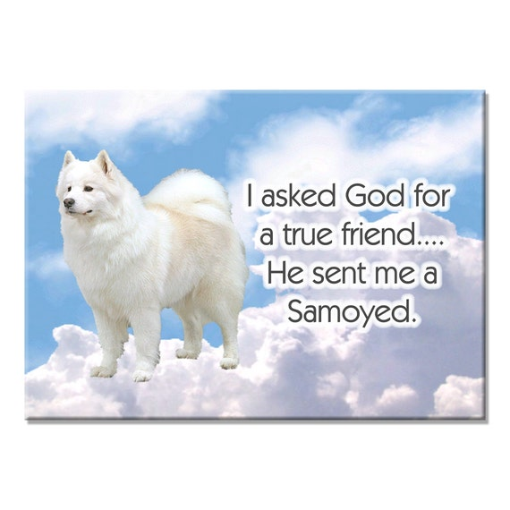 Samoyed True Friend Fridge Magnet