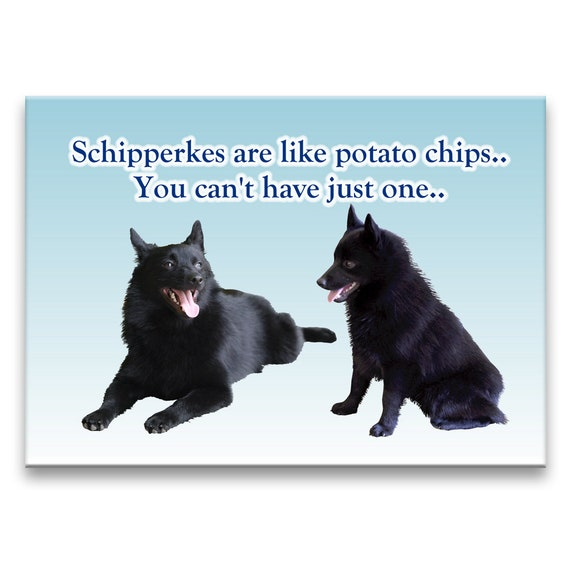 Schipperke Can't Have Just One Fridge Magnet