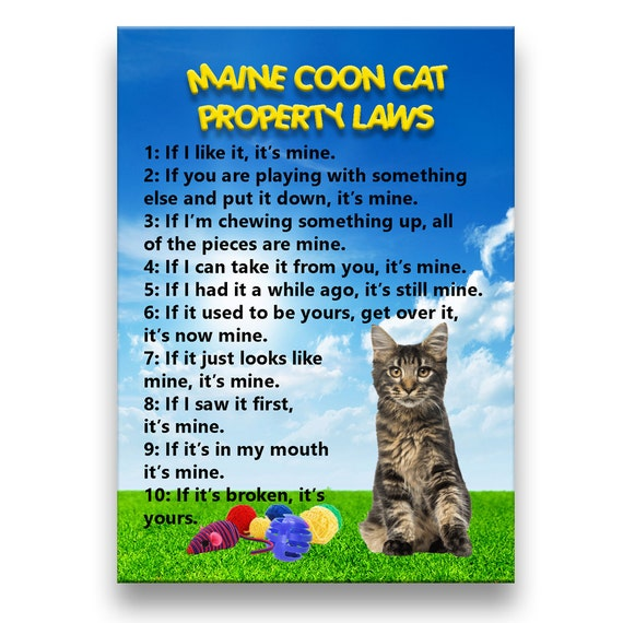 Maine Coon Cat Property Laws Fridge Magnet No 3