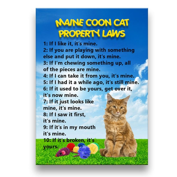 Maine Coon Cat Property Laws Fridge Magnet No 2