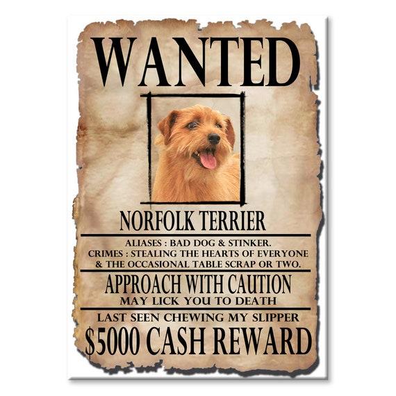 Norfolk Terrier Wanted Poster Fridge Magnet
