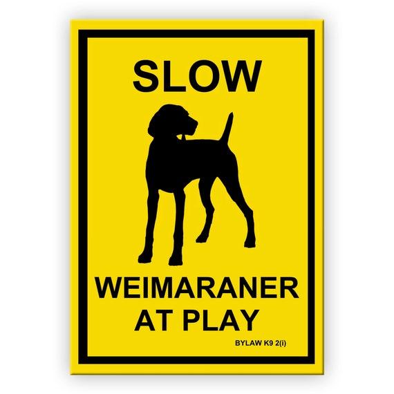 Weimaraner Slow at Play Fridge Magnet