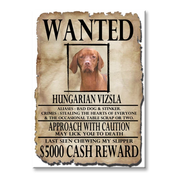 Hungarian Vizsla Wanted Poster Fridge Magnet