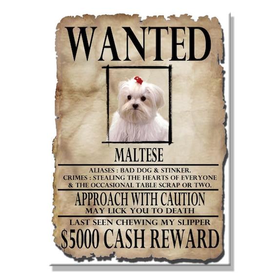 Maltese Wanted Poster Fridge Magnet