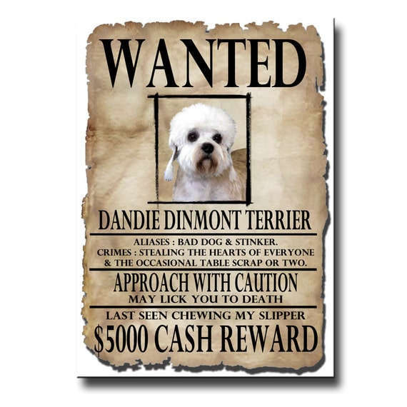 Dandie Dinmont Wanted Poster Fridge Magnet