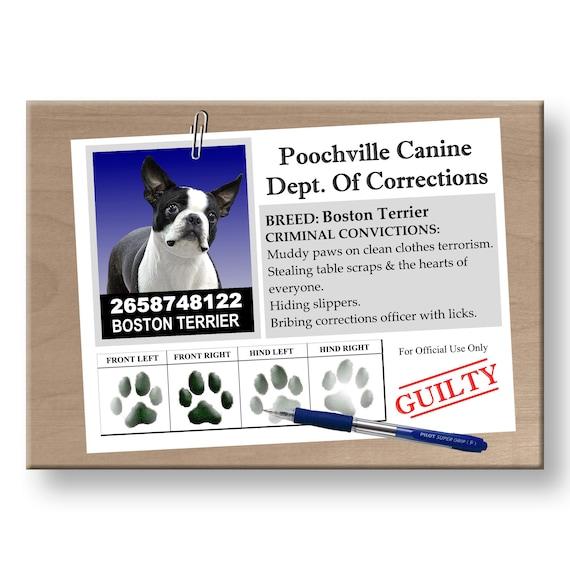Boston Terrier Rap Sheet Funny Fridge Magnet