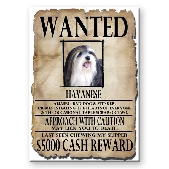 Havanese Wanted Poster Fridge Magnet No 2