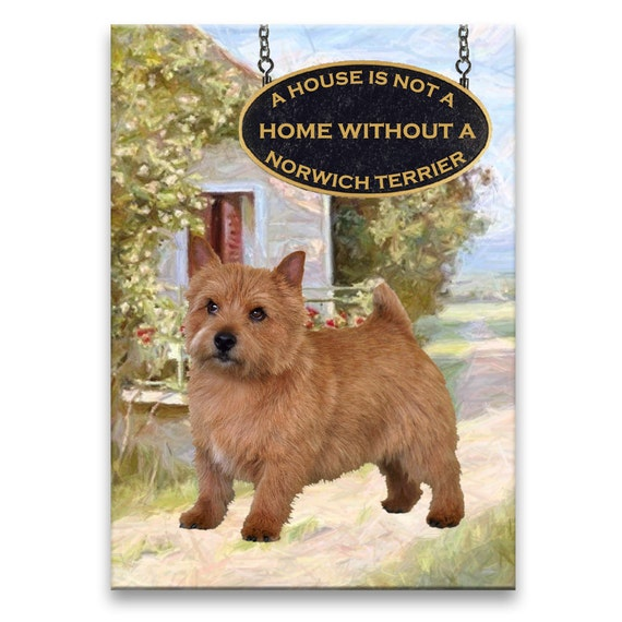 Norwich Terrier a House is Not a Home Fridge Magnet No 1