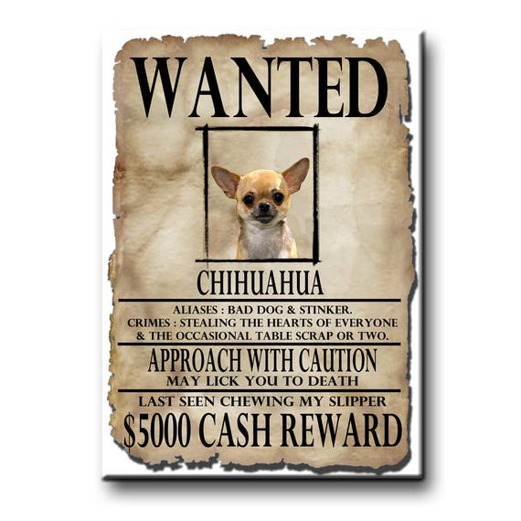 Chihuahua Wanted Poster Fridge Magnet No 1