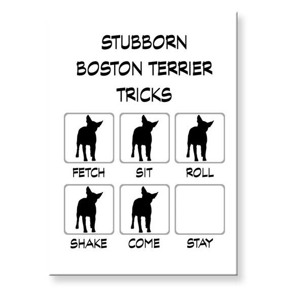 Boston Terrier Stubborn Tricks Funny Fridge Magnet